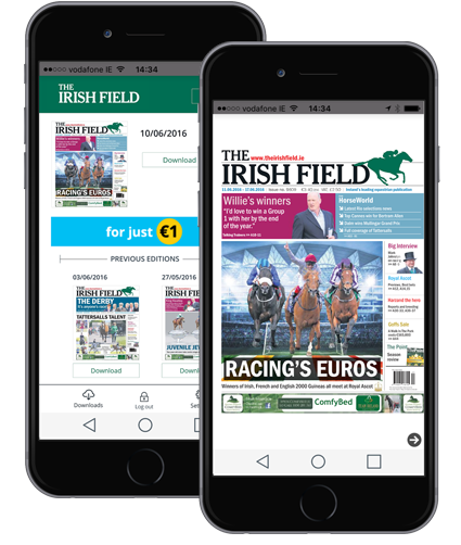 irish field mock up