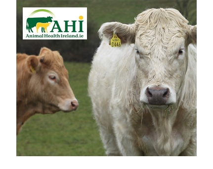 Animal Health Ireland